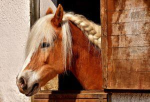 cheval gite des frontières